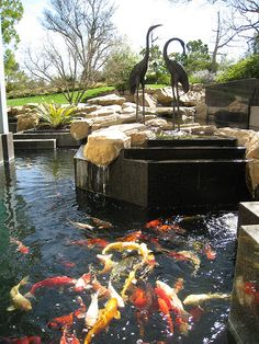 Would love to have a koi pond