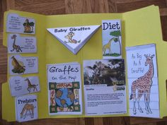 Maestra de Primaria: Lapbook o libros desplegables con bolsillos Elementary Science, Science Experiments Kids, Science For Kids, Science And Nature, Project Based Learning, Kids Learning, We Bare Bears Wallpapers, Teacher Binder, Teacher Hacks
