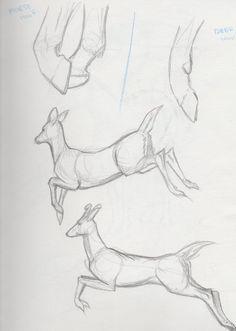 Deer reference 3