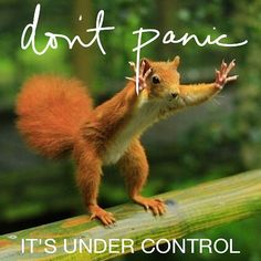 Don't Panic.. it's all under control. hahaha.  #Treehouse squirrel control.