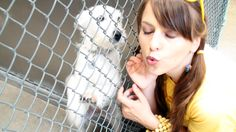 Wish List Donations For Cats & Dogs in Shelters - What Non-Profits REALLY Need