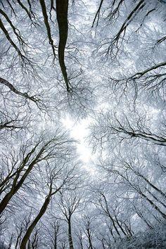 icicle sky