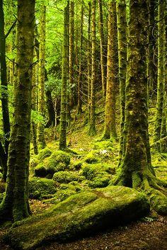 Moss Forest, Killarney, Ireland