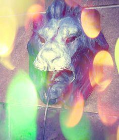 Spitting lion by #nikwerks