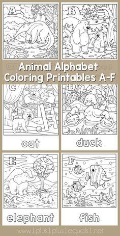Animal Alphabet Colo