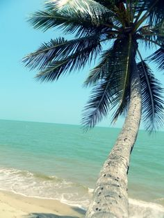 Palm, free in the ocean breeze Destinations, Turtle Beach, Seaside Beach, Tropical Paradise, Summer Paradise, Summer Breeze, Lake Life, Dream Vacations, The Great Outdoors