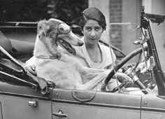 ~ Grande-Bretagne, 1930 ~ Blimey, this whippet can drive!