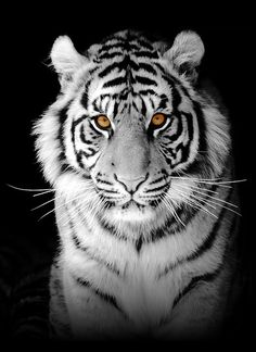 Black Tiger | We produce beautiful and successful web sites that are affordable for ...