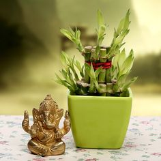 Send the best wishes for a prosperous future to a dear one. Lord Ganesha is all set to bless them. This bamboo plant will look great on the window sill or table bringing lots of good luck. Your Gift Contains: Two layer lucky bamboo plant. Vase. An idol of lord Ganesha
