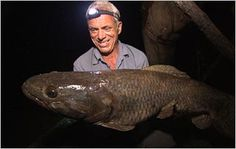 Jeremy Wade with a wolf fish. This fish's most distinguishing feature is its extensive set of teeth. Not only does the wolf fish have multiple rows of teeth lining its jaws, but its throat is also covered with serrated teeth. Jeremy Wade, John Wade, River Monsters, Sea Monsters, Underwater Creatures, Underwater Life, Wading River, Sea Angling, Gone Fishing