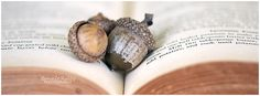 Fall has arrived.  Acorns resting on a vintage recipe book.
