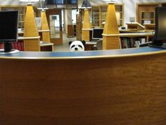 Sometimes I Wear My Panda Hat To Work. This Is What It Looks Like To Everyone Walking Into The Library