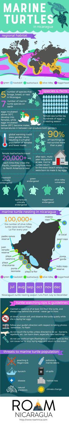 Marine Turtles in Nicaragua  Long before humans appeared in Nicaragua, marine turtles were already swimming in the regions seas and laying eggs on its beaches. These iconic species are not only crucial links in the marine ecosystems surrounding Nicaragua, but they also attract visitors from all over the world.