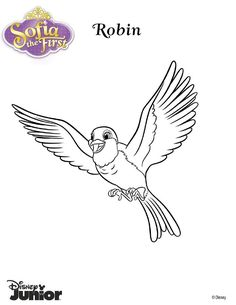 free animals pigeon printable painting pages for preschool