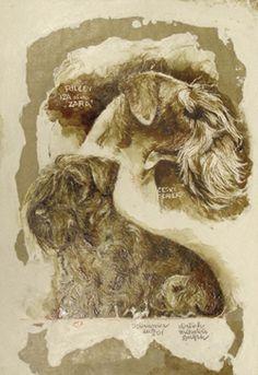 cesky terrier denmark - Sök på Google