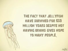 Jellyfish and Humans