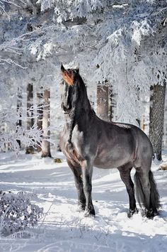 """15 free photo about ''For someone, a horse is a special world"""". 14 free photo of horses ( humor, art). All The Pretty Horses, Beautiful Horses, Animals Beautiful, Cute Animals, Animals In Snow, Majestic Horse, Majestic Animals, Cute Horses, Horse Love"""