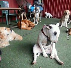 There are dogs and then there are Bull Terriers