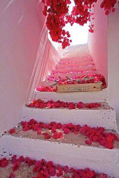 scattered bougainvilleas . . . Santorini, Greece design-dautore.com