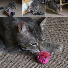 Crinkley Ball Cat Toy (using a pom pom maker and chocolate wrappers).