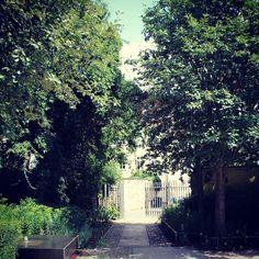 Baumweg #park #erfurt