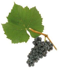 You Bet Your Blauburgunder: Exploring Austrian Pinot Noir ...