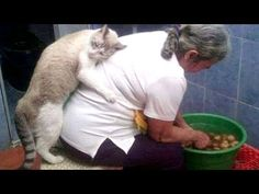 Super FUNNY ANIMAL VIDEOS - Watch and DIE FROM LAUGHING - YouTube