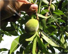 Rarirea fructelor la Piersic si Nectarin Gardens, Agriculture, Life, Salads, Tuin, Garden, Formal Gardens
