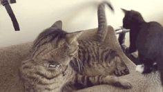 Hey, GTFO | Funny Cat GIFs