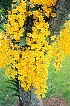 Rita Ariyoshi - Printscapes - Yellow Orchids