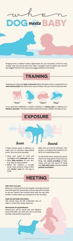 """""""When Dog Meets Baby"""" infographic - tips and tricks for new parents!"""