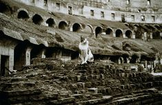 Colosseum in Rome, now home to a large colony of feral cats. Most Beautiful Animals, Beautiful Cats, I Love Cats, Cute Cats, Pub Vintage, Egyptian Cats, Photo Chat, Montage Photo, Roman History