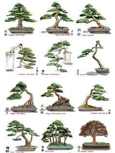 estilos bonsai - Pesquisa Google