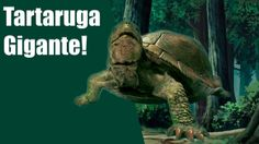 Tartaruga Gigante e sua dona!
