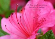 Scripture Framed Prints - Beautiful in Pink Framed Print by Debra Straub