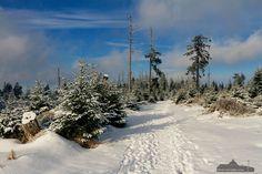 Auch im Winter ist Wandern im Harz ein Erlebnis.