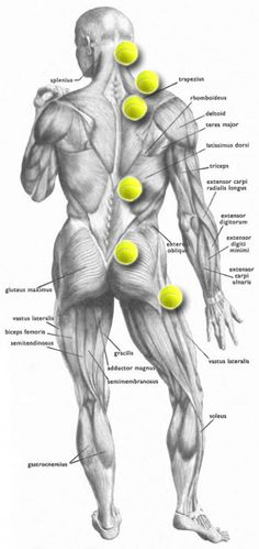 Tennis Ball Trigger Point Map Self massage Latissimus Training, Fitness Workouts, Psoas Release, Trigger Point Therapy, Tight Hip Flexors, Sciatica Pain, Sciatic Nerve Relief, Sciatica Massage, Sciatica Stretches