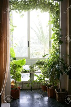 Backlit In A House Room With Plants, Nice Decoration Light Atmosphere Stock Photo, Picture And Royalty Free Image. Image 4019217.