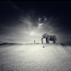 """El Gran Viaje by Luis Beltrán (this photo reminds me of the book by Saramago """"el Viaje del Elefante"""". Photo Elephant, Elephant Love, Elephant Walk, Animal Photography, Fine Art Photography, Elephant Photography, Reproduction Photo, Paul Newman, Stunning Photography"""