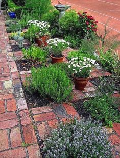 In numerous cities, heavy rainfall quickly incorporates with the tough surface areas of suburb to overload tornado drain systems. When this happens, drain systems could unload stormwater drainage…MoreMore  #GardeningDesign
