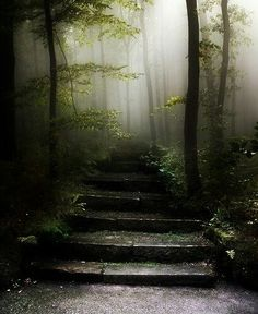 Stairway in nature