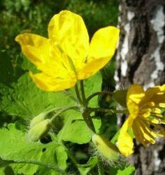 Healing Herbs, Herbalism, Beauty Hacks, Health, Plants, Blog, Allergies, Diet, Magick