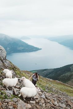 Hardangerfjord, Fjord Norway - Mount Oksen | Travel & Photography All the places you will go