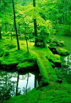 Moss Bridge, Kyoto, Japan