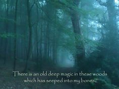 There is an old deep magic in these woods which has seeped into my bones