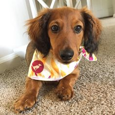 """⚡️ Copper ⚡️ on Instagram: """"Ready for autumn in my new #dogsbesttrend scarf…"""