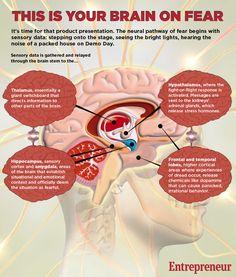brain-on-fear-infographic2.jpg (900×1060)