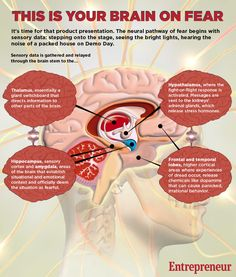 brain-on-fear-infographic2.jpg (900×1060)