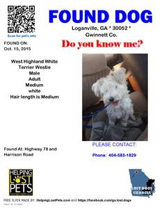 Found Dog - West Highland White Terrier Westie - Loganville, GA, United States