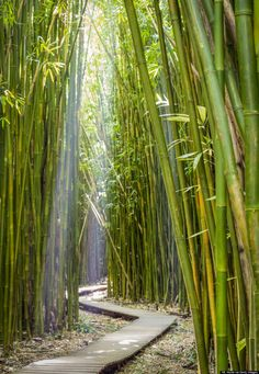 The 21 Most Magical Spots In Hawaii...Love this photo of the Bamboo Forest on Maui